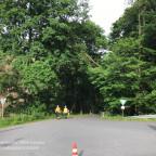 TH 1 - Baum auf Straße | 20.06.21
